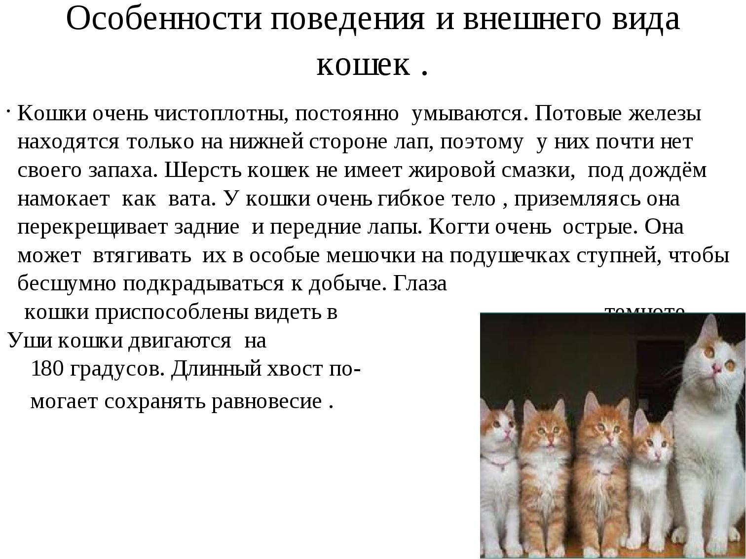 Рыжий кот: особенности характера и популярные породы