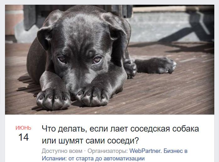 Лает собака у соседей: что делать и куда обращаться