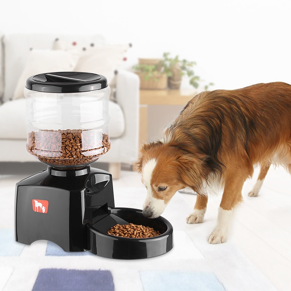Нас и здесь неплохо кормят: автоматическая кормушка для кота