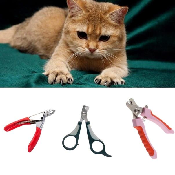 Как подстричь когти кошке: варианты в домашних условиях