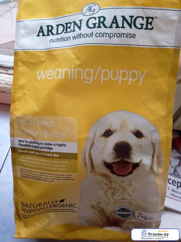 Надо ли размачивать сухой корм для собак?