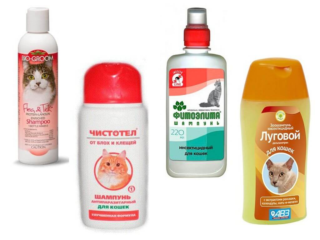 Выбираем шампунь для кошки