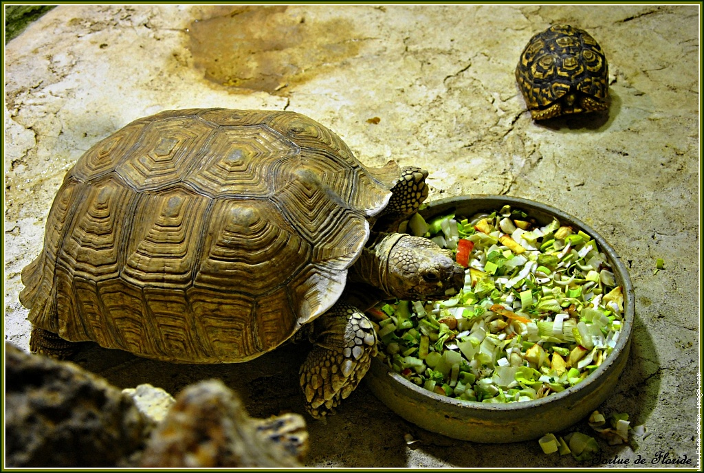 Черепаха болотная — кто такие, чем питаются и как за ними ухаживать