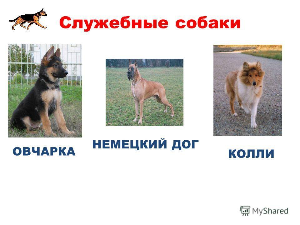 Какие породы собак называют служебными