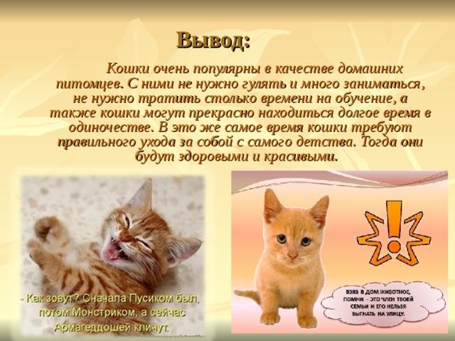 Специалист по домашним кошкам: как называется и чем занимается