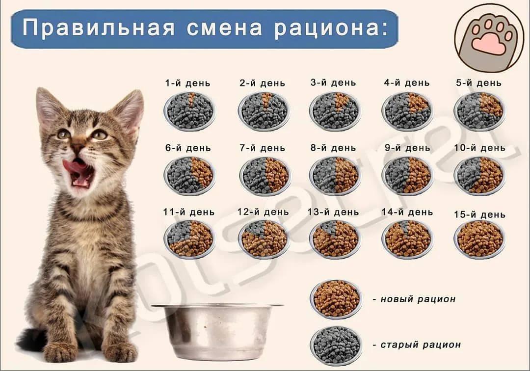 Как часто котята ходят в туалет: сколько раз в день