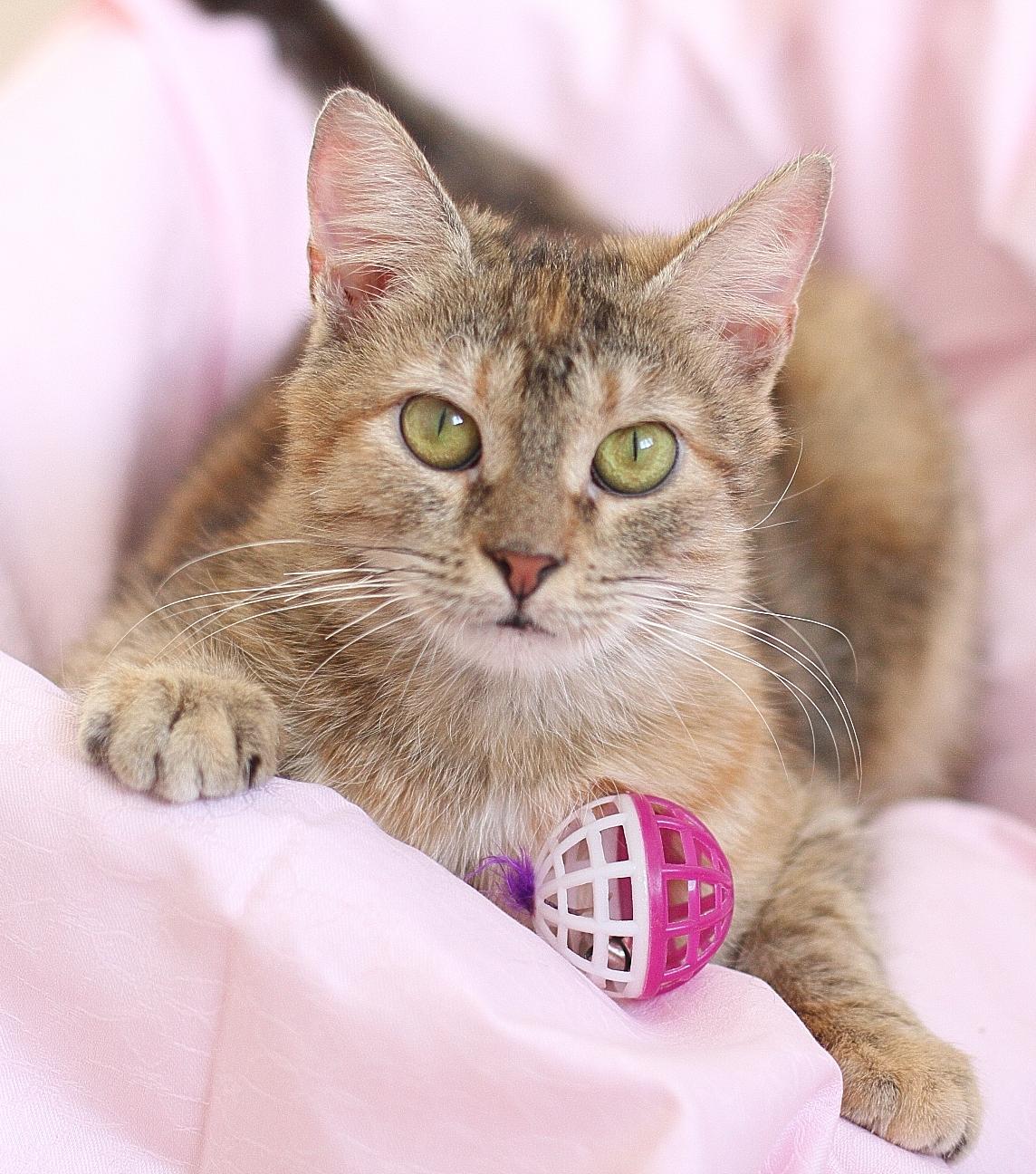 Как выбрать имя для кошки? ТОП-7 интересных идей
