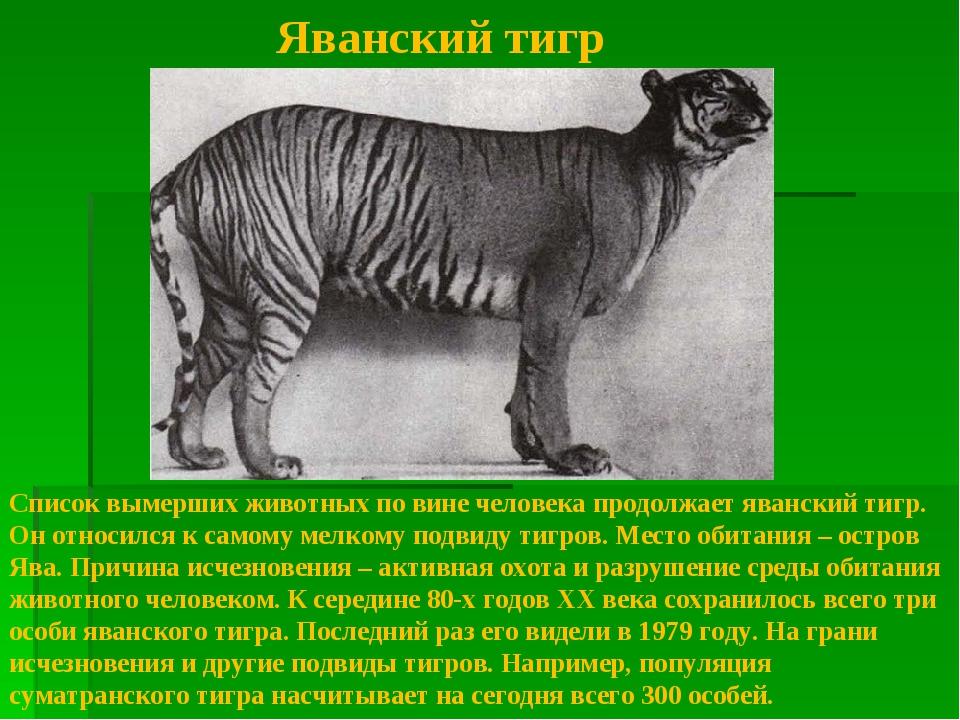 Саблезубые кошки: мифы, версии, факты